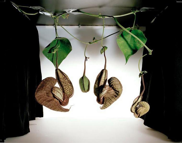 Photographie d'une œuvre végétale