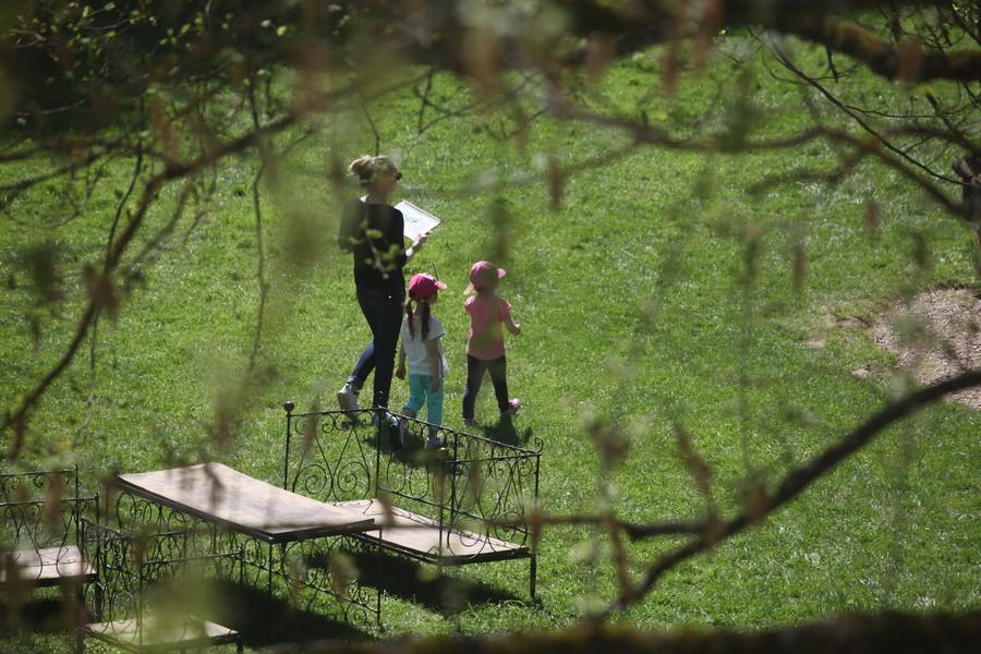 vue aérienne des jardins à travers les branches des arbres