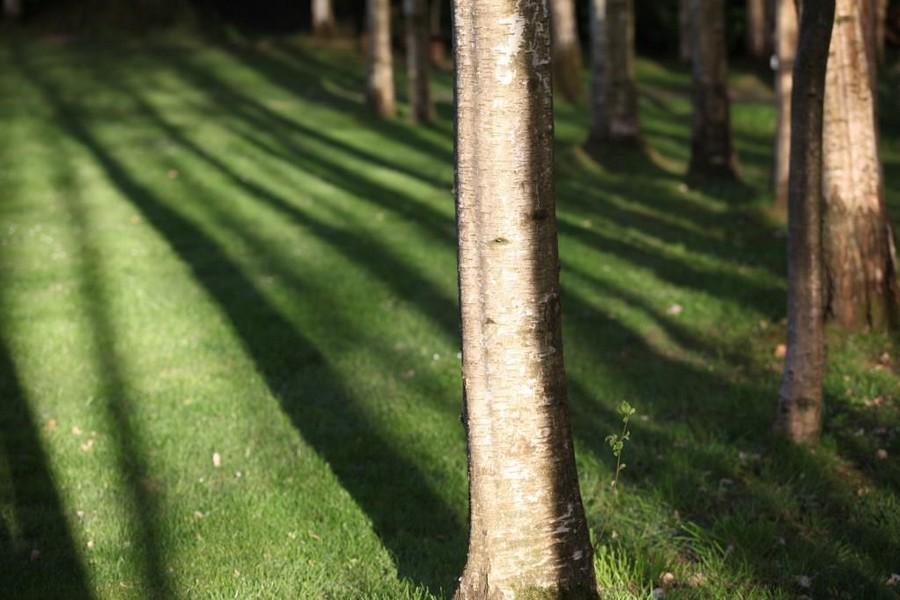 Tronc d'arbre bicolore noir et blanc parfaitement délimité